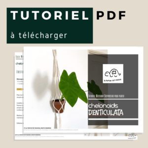 Tutoriel Suspension en Macramé – chelonoidis DENTICULATA